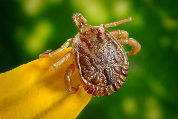 Tick Season is Getting Here Earlier and Spreading Wider than Ever Before