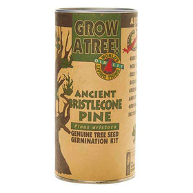 The Jonsteen Company - Ancient Bristlecone Pine | Seed Grow Kit