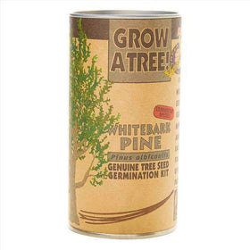The Jonsteen Company - Whitebark Pine | Seed Grow Kit