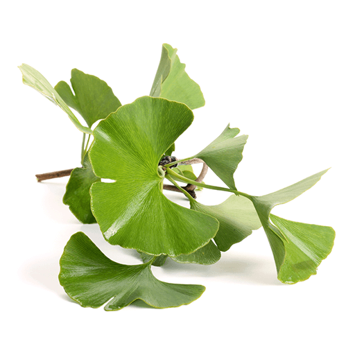 This product contains Ginkgo Biloba