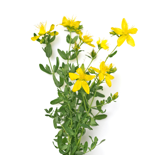 This product contains St. John's Wort