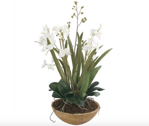 Moth Orchid Planter - Revibe Designs