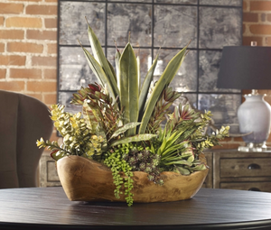 Salar Succulents in Teak Bowl - Revibe Designs