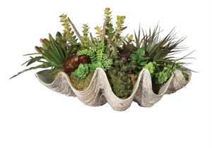 SeaCoast Succulents - Revibe Designs