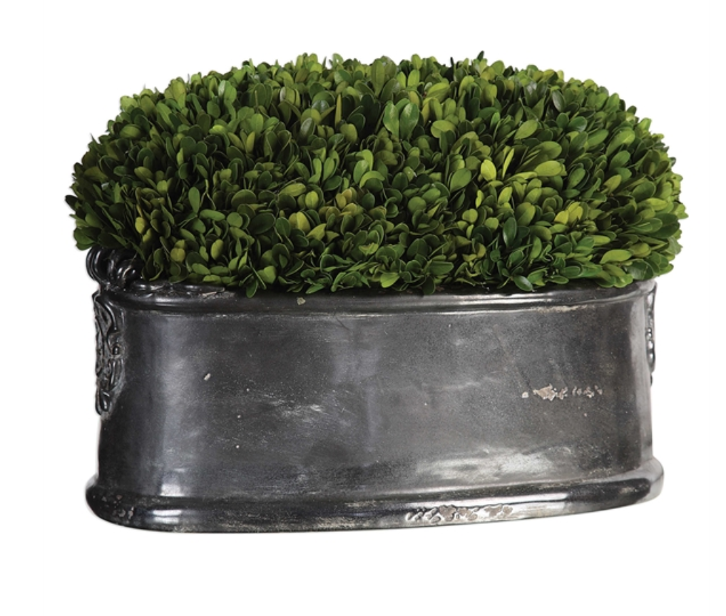 Preserved Boxwood Planter - Revibe Designs