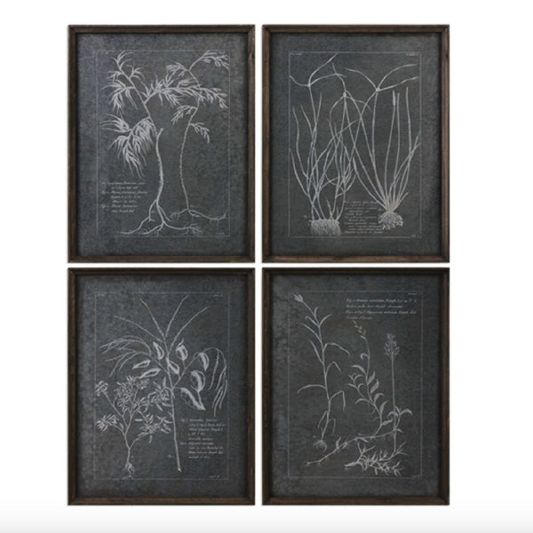 The Study of Roots Set of 4 Wall Art