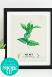 Printable Kitchen Wall Art: Culinary Herb Print Set