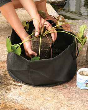 Pond Plant Products