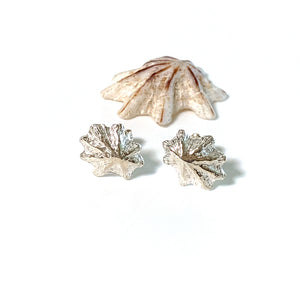 Sea inspired Limpet Shell Stud Earrings
