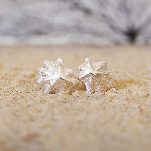 Sea inspired Limpet Shell Stud Earrings closeup