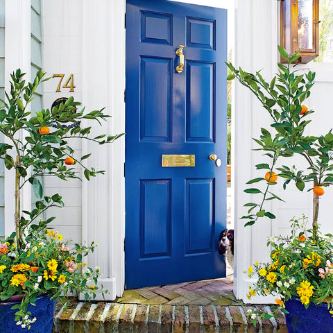 Cobalt Blue front door with lemon trees in planters
