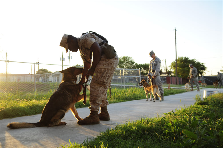 How Service Dogs Help Veterans