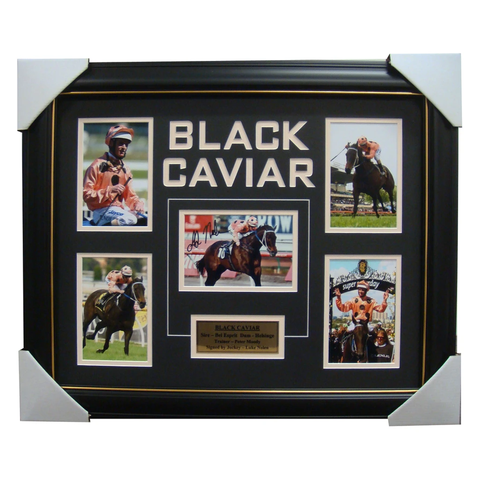 Black Caviar Signed Photo Collage Framed with Plaque - 3981