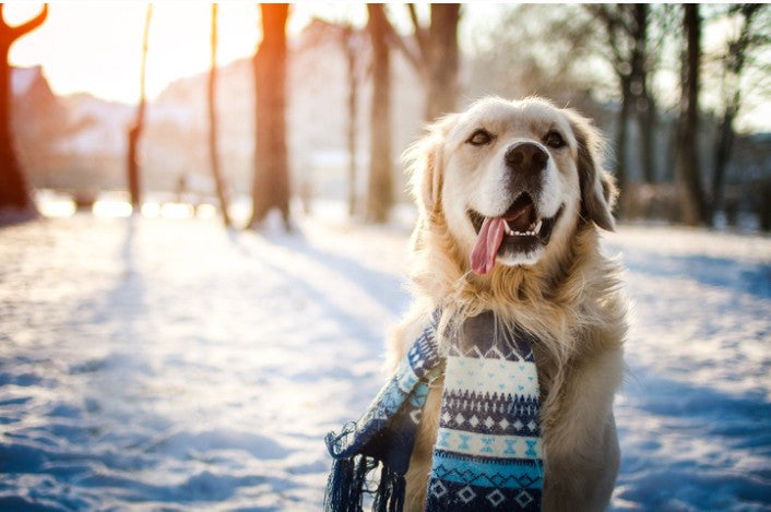 10 Tips to Keep Your Dog Safe & Warm This Winter