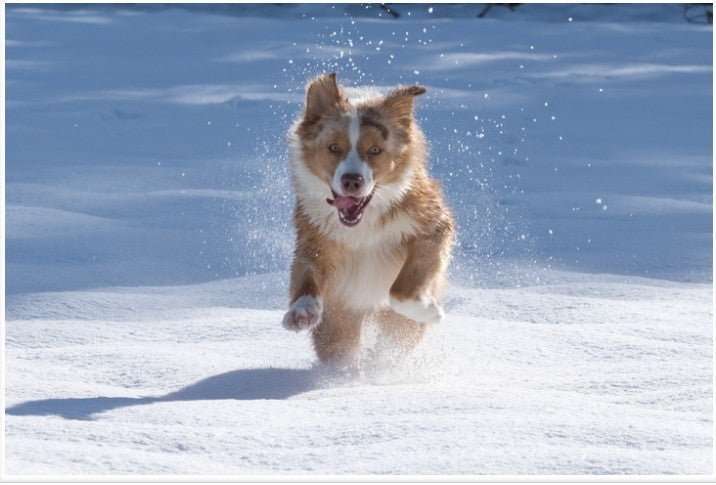 Fun Activities to Keep Your Dog Active This Winter