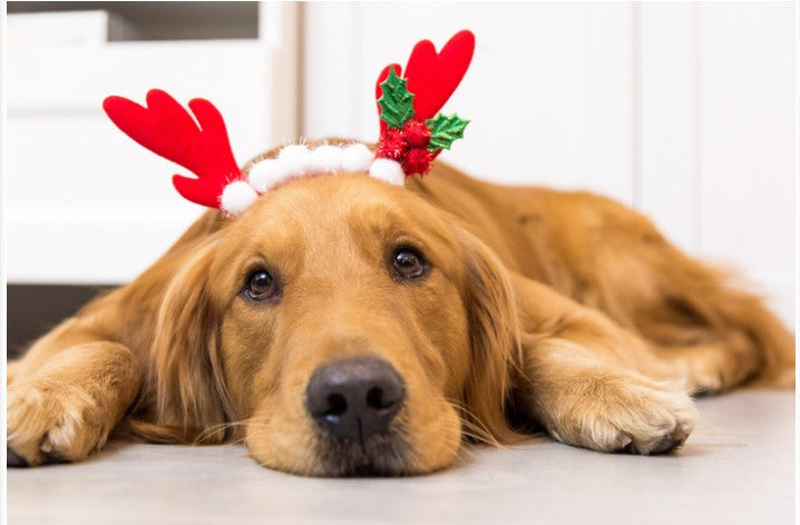 How to Make the Holidays Even More Enjoyable for Your Dogs!