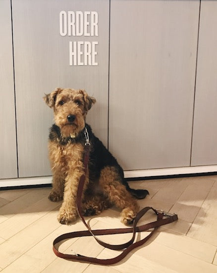 Lululemon is a dog-friendly store in Central London