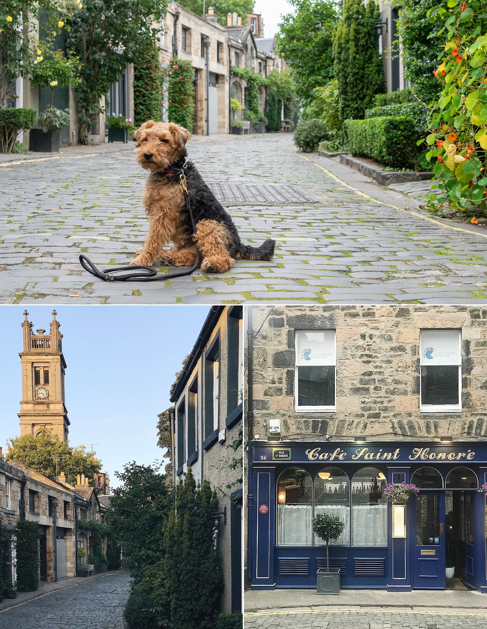 A weekend in Edinburgh with a dog