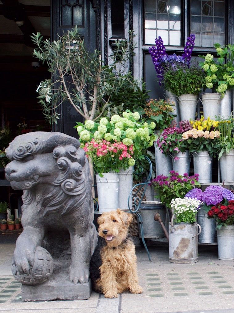 Liberty of London is a dog-friendly store in Central London