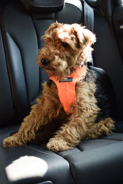 The safest car harness for dogs
