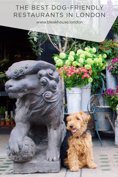 The Best Dog-friendly restaurants in London