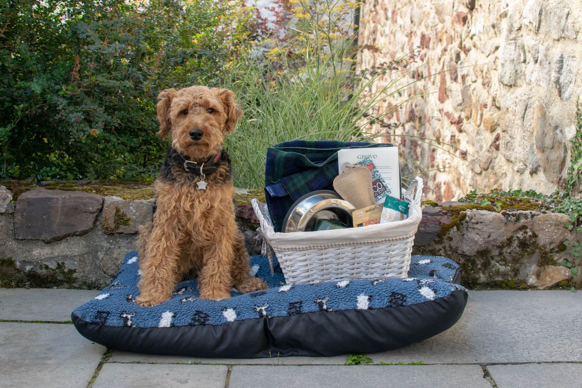 The Grove of Narbeth hotel in Pembrokeshire is very dog friendly