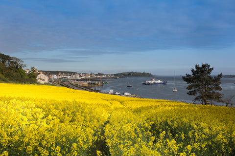 Portaferry Gold