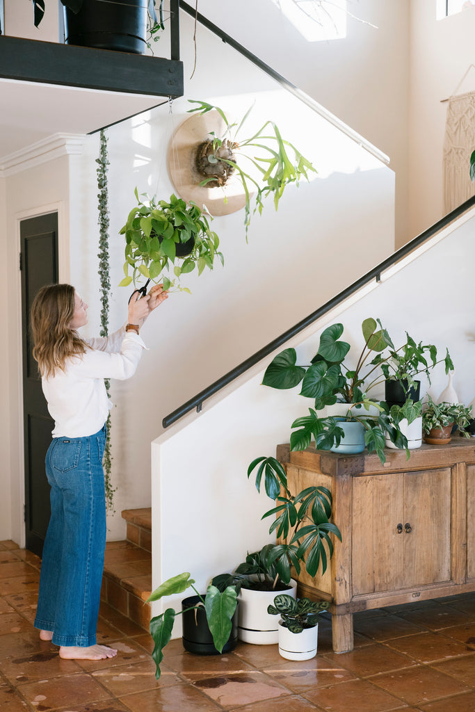 Top tips for thriving house plants this Winter