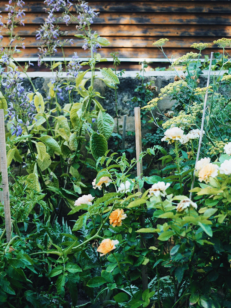 Cultivating a Cottage Garden with Casey from Pinch Dash Glug