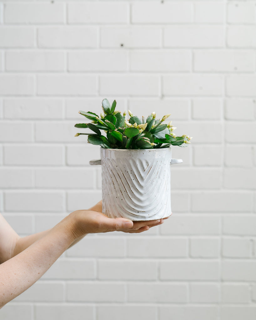 Milkwash Wave Planter