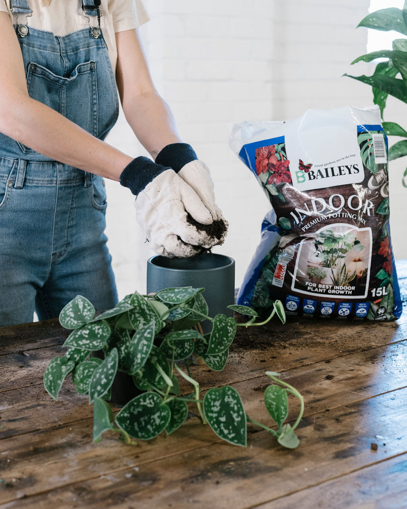 Indoor Potting Mix