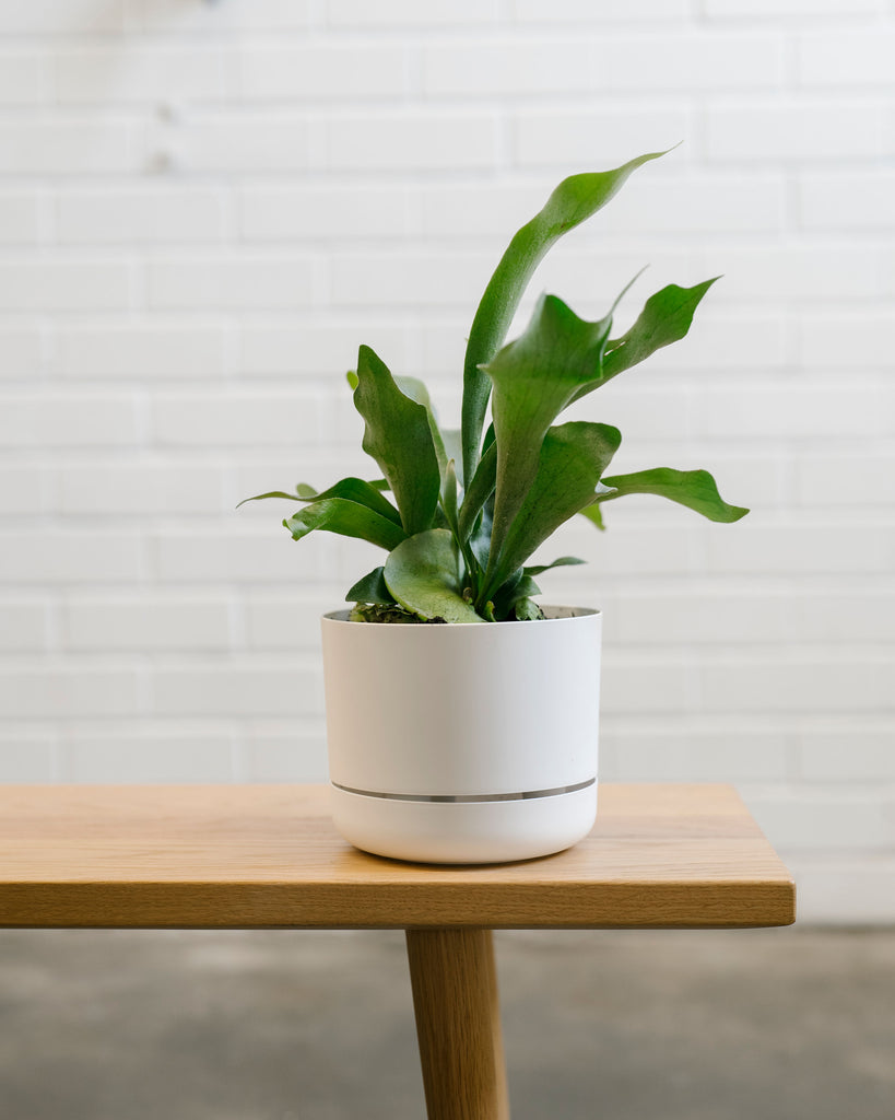 Mr Kitly Self Watering Pot - Small