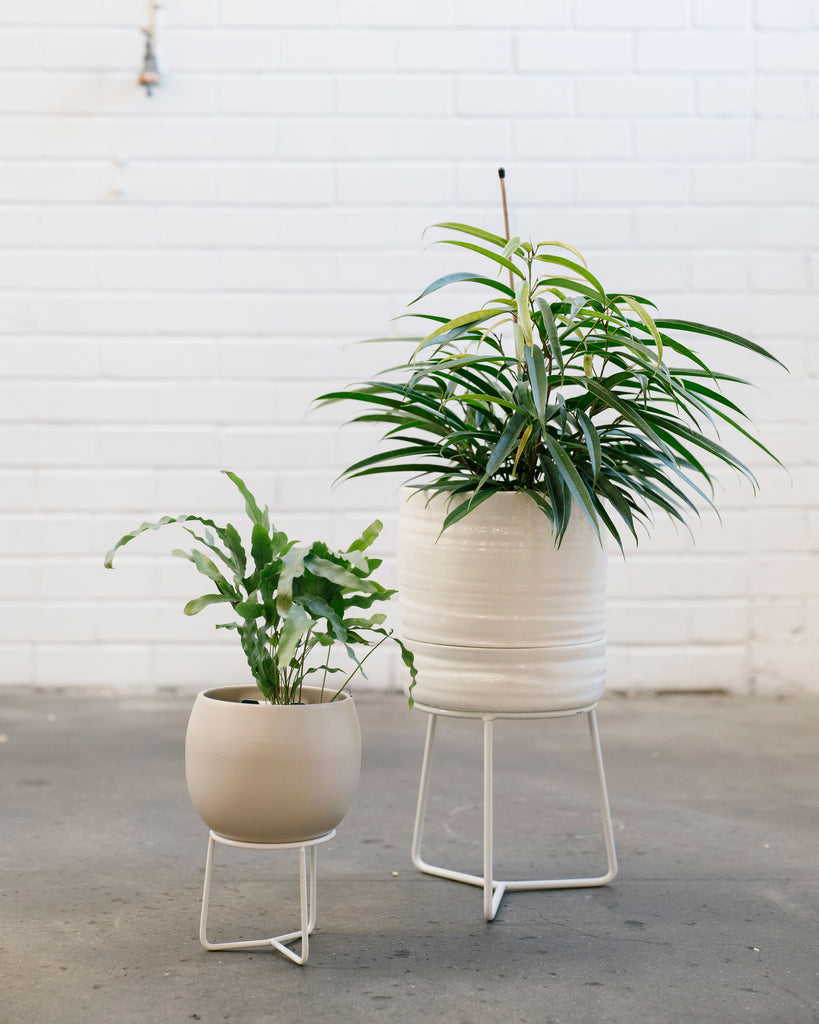 Angus and Celeste Plant Stand