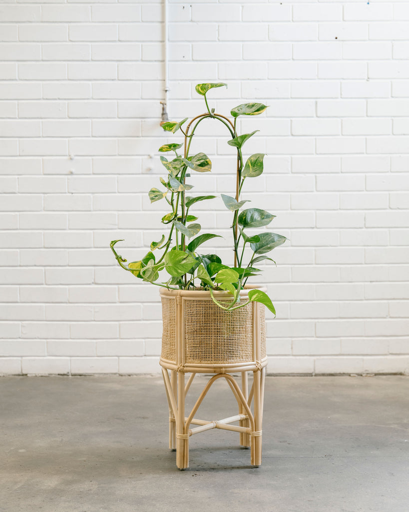 Kingston Rattan Pot Stand