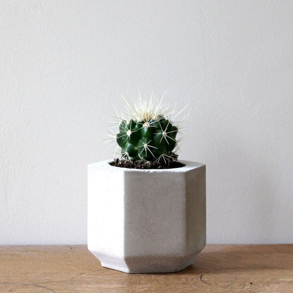 Cacti And Succulent Concrete Planter Short