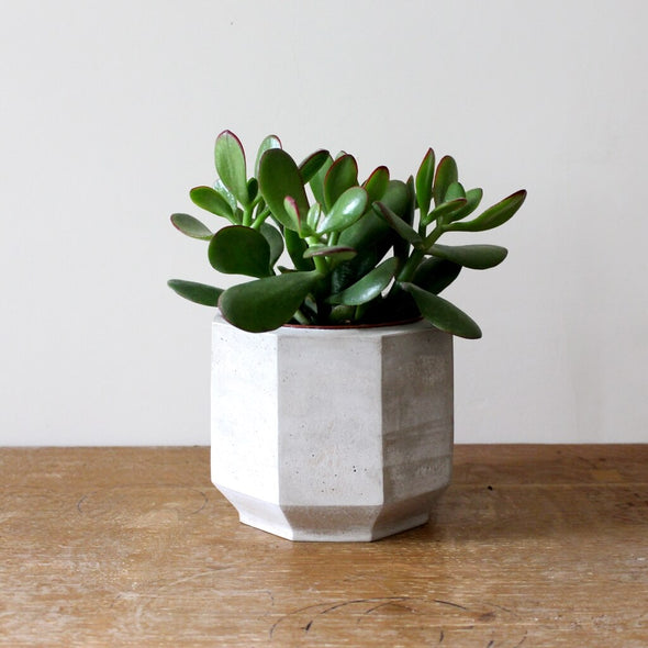 Octagonal Concrete Planter for Cactus or Succulents