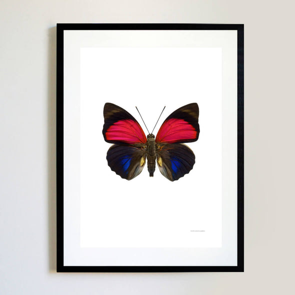 Pink Butterfly Magnified Insects Print