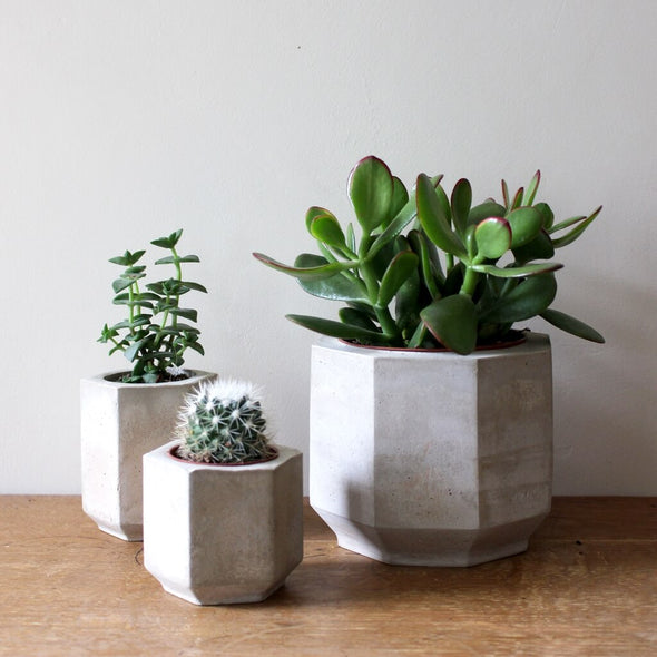 Set of 3 Concrete Planters for Cactus and Succulents