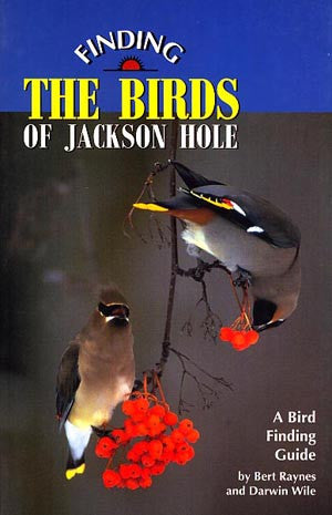 Finding The Birds of Jackson Hole