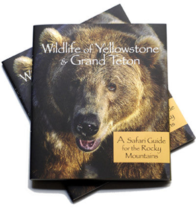 WILDLIFE OF YELLOWSTONE & GRAND TETON