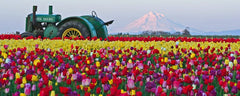 20 Things To Do At The Wooden Tulip Festival