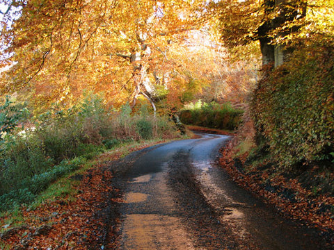 Scotland's Brisbane Glen Road in Autumn