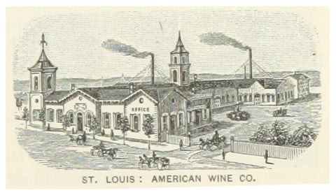 St Louis Wine Company