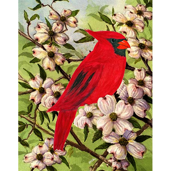 Cardinal In Dogwood Wall Art