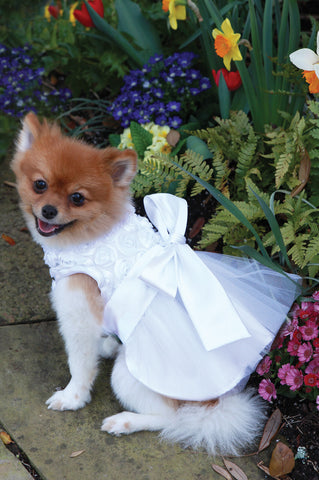 The Bianca Rose Ribbon Dog Dress - Marry Me Wedding Accessories & Gifts