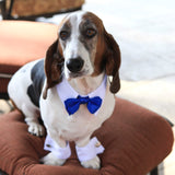 White Shirt Dog Collar with Bow Tie - Marry Me Wedding Accessories & Gifts - 2