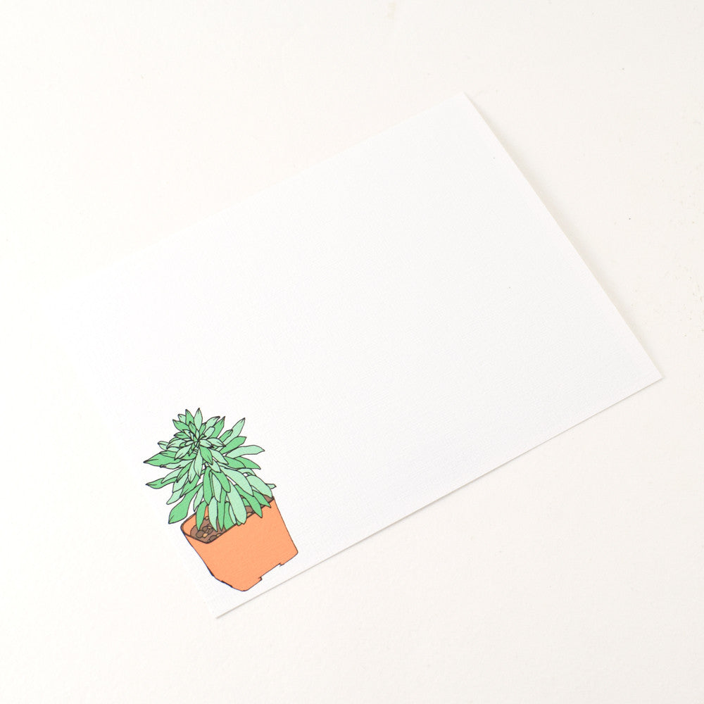 Assorted Notecard Set in Succulents