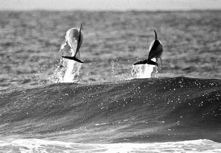 PASS SURFER BW