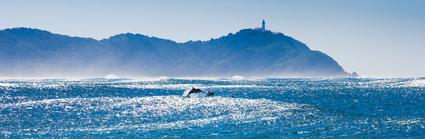 SURFING DOLPHIN CAPE BYRON 2
