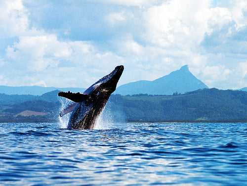 WHALE MT WARNING
